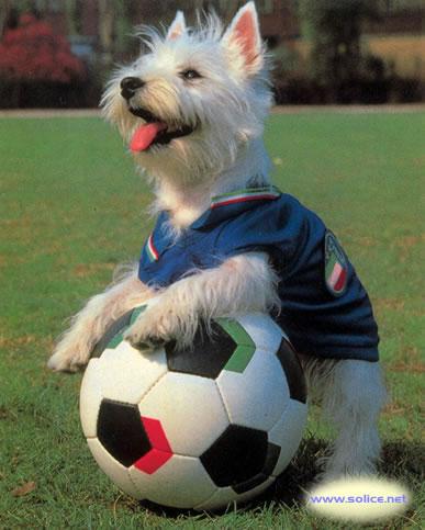 Chien - Fille joue au foot ...